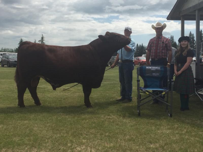 Grand Champion Bull - RamRod Cattle Company