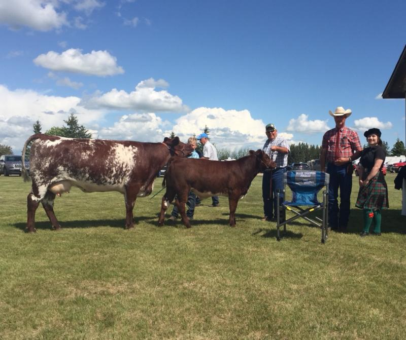 Grand Champion Female - Kroner Livestock
